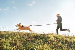 Ejercicios de Canicross Funcionamientos del hombre con su perro del beagle Actividad del deporte al aire libre con el animal dom? fotos de archivo libres de regalías