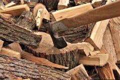 Ek: huggit av trä arkivbild