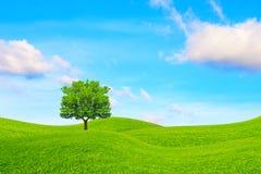 Ek, kullar och himmel Arkivfoton