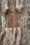 Ek och klippta murgrönavinrankor Royaltyfria Foton