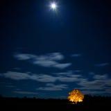 Ek på natten med stjärnor på sky.GNen Arkivfoton
