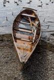 Eka på kust av Derwent vatten, Keswick Royaltyfria Foton