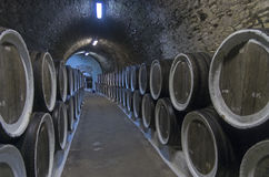 Eken barrels med vin i vinodlingsellarsna crimea arkivbild