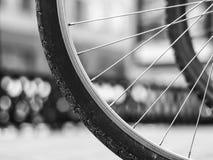 Eker av ett cykelhjul på en suddig bakgrund arkivbilder