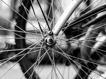 Eker av ett cykelhjul på en suddig bakgrund royaltyfri bild