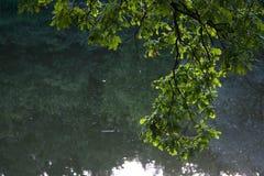Ekfilial med ljust - gräsplansidor över vatten Arkivfoton