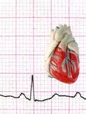 EKG réel avec le coeur modèle Images libres de droits