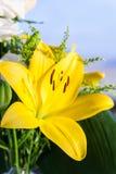 Ekibany med härliga blommor Arkivbild