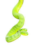 Ekiiwhagahmg snakes (snakes green) Royalty Free Stock Images