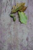 Ekollonar och blad på träyttersida Royaltyfria Foton