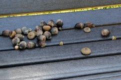 Ekollonar på en parkerabänk Arkivfoto