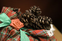 ekollonpåse Royaltyfri Fotografi
