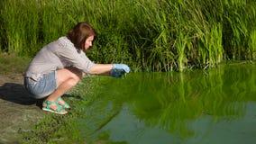 Ekolog för vuxen kvinna som tar prövkopior av gröna alger i provrör på flodstrand stock video