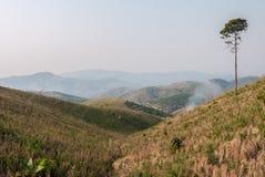 Ekologi, global uppvärmning och skogsavverkning, skogsbränder, torka Royaltyfria Bilder