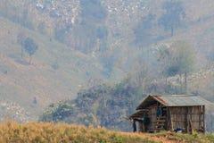 Ekologi, global uppvärmning och skogsavverkning, skogsbränder, torka Royaltyfria Foton