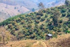 Ekologi, global uppvärmning och skogsavverkning, skogsbränder, torka Arkivbild