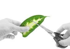 Ekologi - grön leaf i exponeringsglas av vatten. Royaltyfri Fotografi