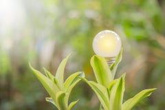 Ekologi och saveing ljusa kulor för energi som ledas med naturlig elkraft arkivfoton