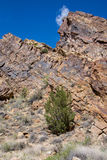 Ekologi parkerar den tempelkanjonCanon staden Colorado Royaltyfri Fotografi