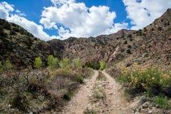 Ekologi parkerar den tempelkanjonCanon staden Colorado Royaltyfria Bilder
