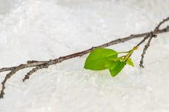 Ekologia, środowiska zanieczyszczenia pojęcie Zielona roślina w bąbla wr fotografia royalty free
