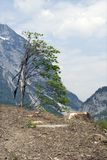 ekologia zdjęcie stock