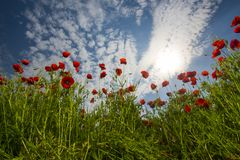 Ekologia i invironment fotografia royalty free