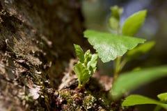 Ekologia jest naturalnym krajobrazem Wiosny słońce jest w zielonym lesie fotografia stock