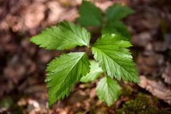 Ekologia jest naturalnym krajobrazem Wiosny słońce jest w zielonym lesie zdjęcie stock