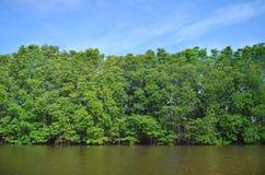 Ekologia namorzynowy las przy Tajlandia Zdjęcie Stock