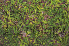 Ekologia tekst geaphic na trawie zdjęcie royalty free