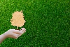 Ekologibegreppspapper klippte mänskliga händer som rymmer det stora växtträdet med på världsmiljön arkivbild