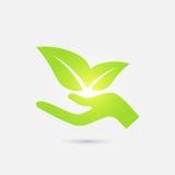 ekologiczna ikona Ludzcy ręki dorośnięcia zieleni liście Fotografia Stock