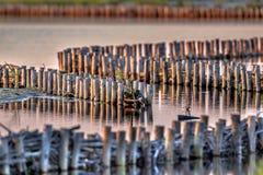 Ekologiczna Riverbank ochrona Zdjęcie Royalty Free