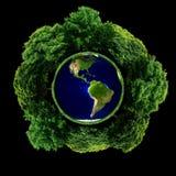 Ekologiczna rośliny ziemia Zdjęcie Stock
