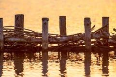 Ekologiczna Wierzbowa campshedding riverbank ochrona Zdjęcia Royalty Free