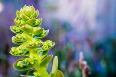 Ekologicznie życzliwa roślina Obrazy Royalty Free