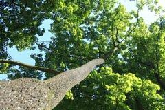 ekologii środowiska drzewny bagażnik Zdjęcie Royalty Free