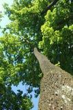 ekologii środowiska naturalny drzewny bagażnik fotografia royalty free