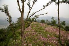 ekologisk äng Fotografering för Bildbyråer