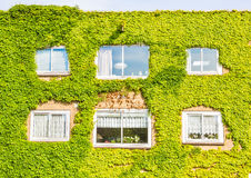Ekologisk byggnad med väggen som är full av växter Royaltyfri Fotografi