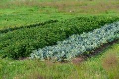Ekologisk grönsakträdgård Royaltyfri Fotografi