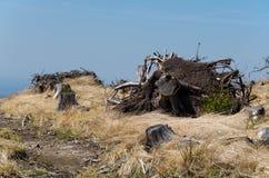 Ekologisk katastrof Arkivfoto