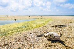 Ekologisk katastrof, utplåning av fåglar, oljeutsläpp, naturbakgrund Arkivbild