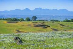 Ekologisk reserv för norr tabellberg, Oroville, Kalifornien Fotografering för Bildbyråer