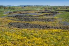 Ekologisk reserv för norr tabellberg, Oroville, Kalifornien Arkivbild