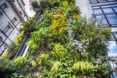 Ekologisk växtgarnering Arkivfoto