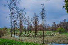 Ekologisk våtmark parkerar Fotografering för Bildbyråer
