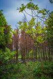 Ekologisk våtmark parkerar Arkivfoton