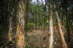 Ekologisk våtmark parkerar Royaltyfria Bilder